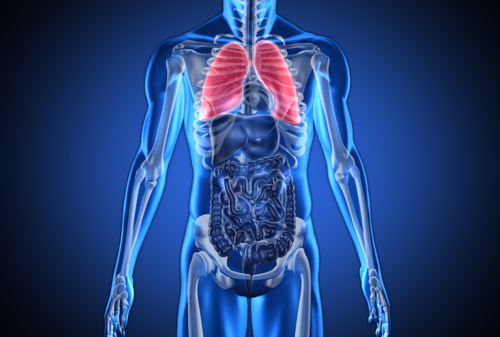 Digital blue human with highlighted lungs on dark blue background